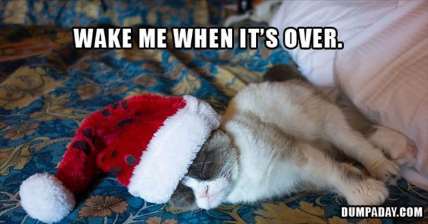 grumpy-cat-hates-christmas